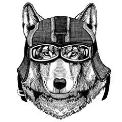 Wild wolf, dog Hipster animal wearing motorycle helmet. Image for kindergarten children clothing, kids. T-shirt, tattoo, emblem, badge, logo, patch