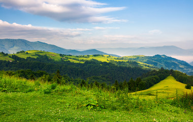 mountainous landscape in the morning. fresh summer scenery with grassy meadows on forested hills. fog in the distant valley and some clouds on a blue sky
