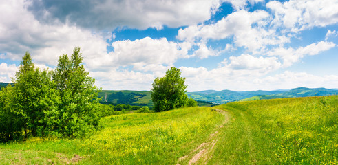 country road through grassy meadow on hillside. beautiful summer scenery of Carpathian mountains. gorgeous cloudscape on a blue sky