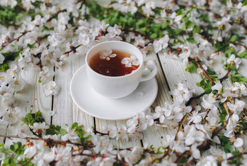 Cup of green tea and spring apricot blossom on a old wooden background. Rustic.