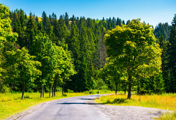 countryside road through forest. beautiful landscape on fresh summer morning