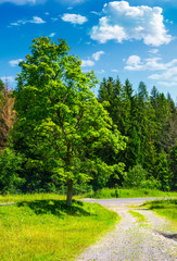 country road through the forest on a grassy meadow. beautiful summer landscape of Carpathians