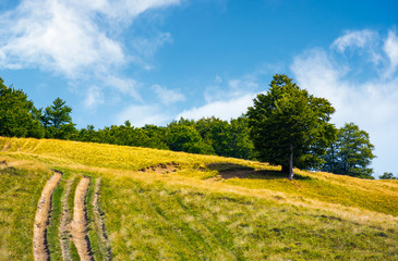 mountain road uphill along the forest. beech tree stand separately on the grassy meadow. lovely nature scenery in summer
