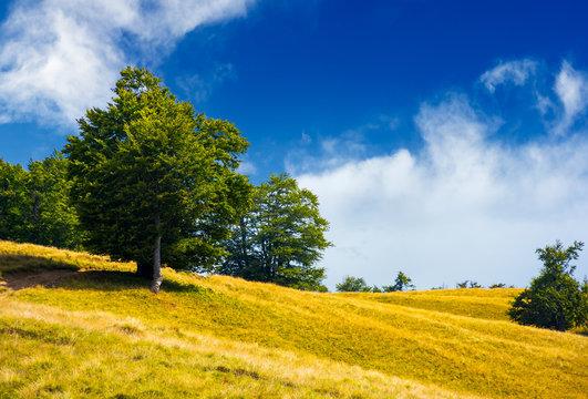 trees on a grassy hillside in summer. lovely nature scenery