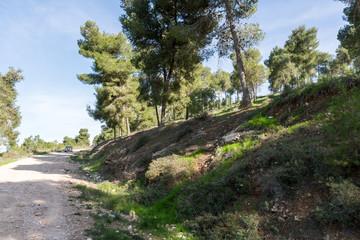 Visiting Lahav Forest in northern Negev