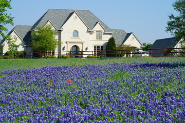 Countryside home with Texas Bluebonnet wildflowers blooming during spring time