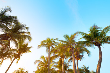 Coconut palm tree on tropical beach blue sky with sunlight of morning in summer, uprisen angle.