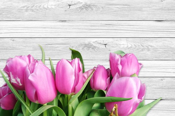 colorful spring tulip flower in white wooden background with text copy space