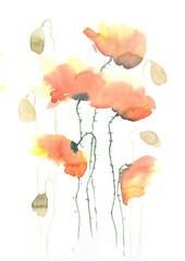Stylized poppy flowers on white, watercolor illustrator