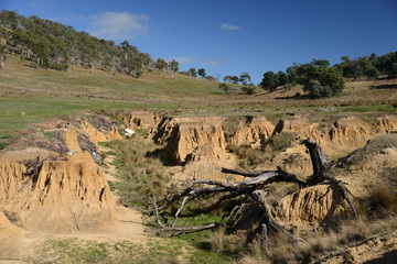Erosion gully in farmland