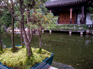 Bonsai Trees and Japanese Garden Pond