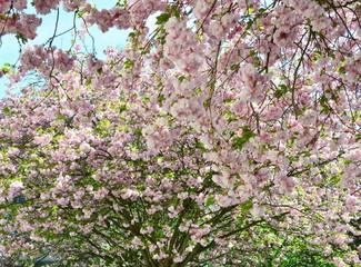 Blütenrausch, Frühling