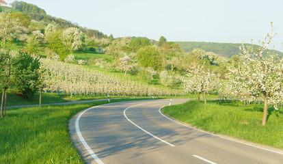 Landstrasse im Frühling