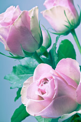 bunch bouquet of flowers pink roses in romantic soft colors in full frame