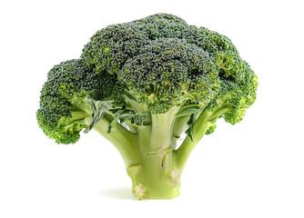 Fresh single ripe broccoli isolated on white background