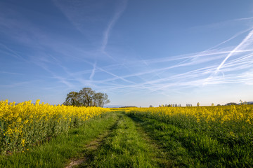 Way through the fields in the spring
