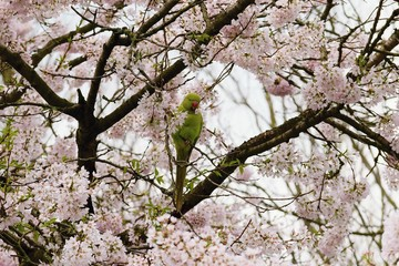 Parrot on a tree with a floret in a beak.