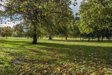 London, UK, 1 November 2012: Hyde Park