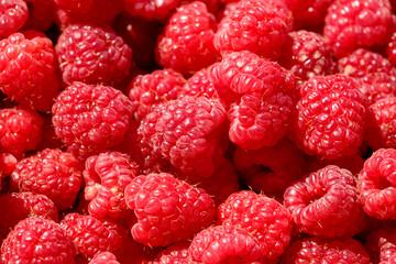 fresh fruits raspberry close up.