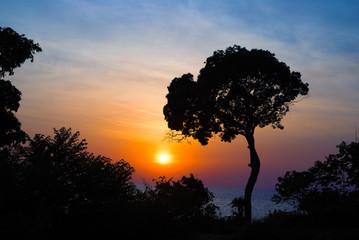 Vivid blue orange sunset sky. Dark tree silhouette on sky background. Summer travel on tropical island.
