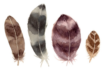 watercolor illustration set feathers. hand painted isolated elements.