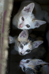selective focus curious group of cute small domestic kittens cat in brown paper box