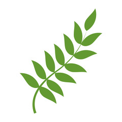 nature plant branch with leaves design