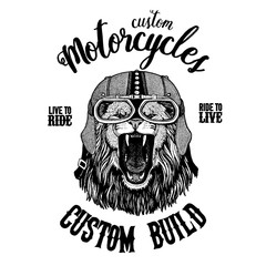 Wild lion. Biker, motorcycle animal. Hand drawn image for tattoo, emblem, badge, logo, patch, t-shirt