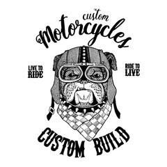 Bulldog, dog. Biker, motorcycle animal. Hand drawn image for tattoo, emblem, badge, logo, patch, t-shirt