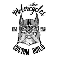 Wild cat Lynx Bobcat Trot Biker, motorcycle animal. Hand drawn image for tattoo, emblem, badge, logo, patch, t-shirt