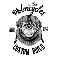 Chimpanzee Monkey Biker, motorcycle animal. Hand drawn image for tattoo, emblem, badge, logo, patch, t-shirt