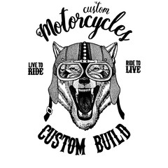 Wolf Dog Wild animal Biker, motorcycle animal. Hand drawn image for tattoo, emblem, badge, logo, patch, t-shirt