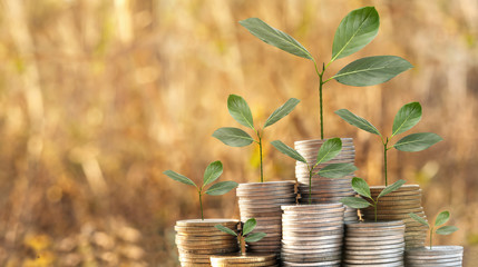investment growing money of tree leaf infestation