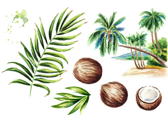 Coconut palm set. Watercolor hand drawn illustration, isolated on white background