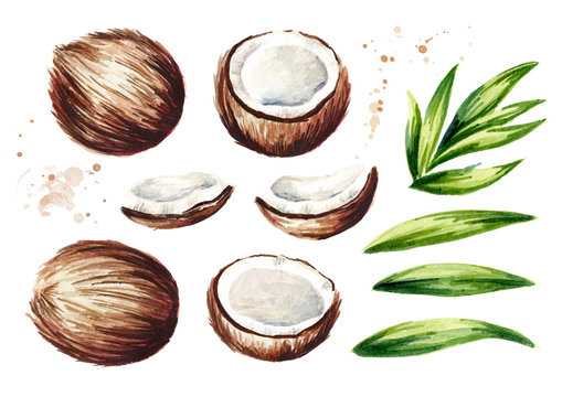 Coconut elements set. Watercolor hand drawn illustration  isolated on white background