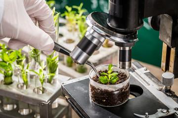 School laboratory exploring new methods of plant breeding