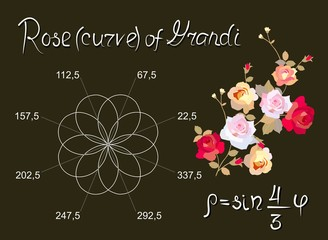 Rose of Guido Grandi is beautiful mathematical curve. Educational card in vector.