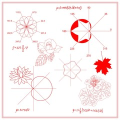 Entertaining Mathematics. Trigonometric functions and algebraic graphs of water lily sheet, maple and nasturtium leaves, eight-petalled rose Grandi, constructed in polar coordinate system in vector.