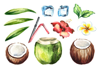 Tropical fresh coconut cocktail set with straws, mint, plumeria, hibiscus flower, ice cubes and green leaves. Watercolor hand drawn illustration  isolated on white background