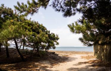 chemin à travers la pinède débouchant sur la plage
