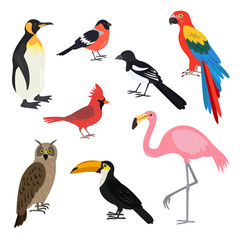 Set of cartoon cute birds on white background.