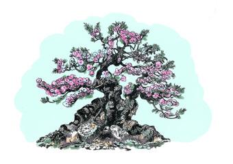 Bonsai Spring Blooming