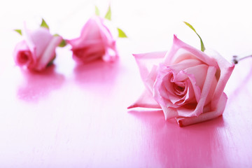 Pink roses on a bright pink background