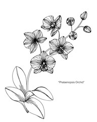 Orchid flower drawing illustration.
