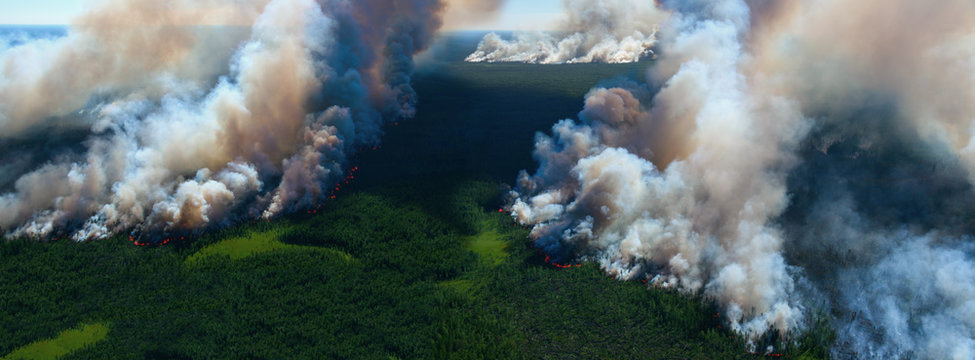 Forest fire, top view