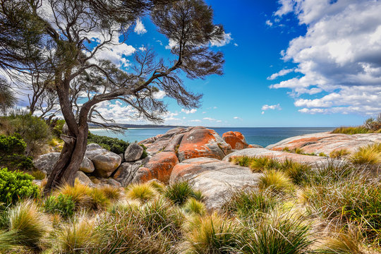 Beautiful sunny summer coast view from Bay Of Fires to blue Tasman Sea with crystal clear water surrounded by red orange colorful shore rocks and white sandy beach, Cosy Corner, Tasmania, Australia