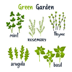Set of vector illustration herbs with lettering. Green growing basil, rosemary, thyme, mint, arugula. Gardening. For your design.