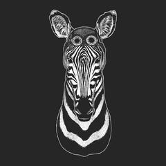 Zebra Horse Hand drawn illustration for tattoo, emblem, badge, logo, patch Cool animal wearing aviator, motorcycle, biker helmet.