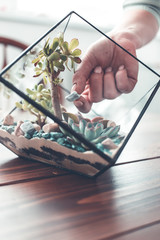 Picture of florist webinar on maiking florarium with stones and succulents