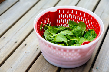 Fresh Spinach in a salad spinner bowl on old dark wooden table, top view, copy space